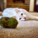 Kitty Nugz- Felted Cat Toy